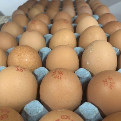 Tray of Eggs | (30)